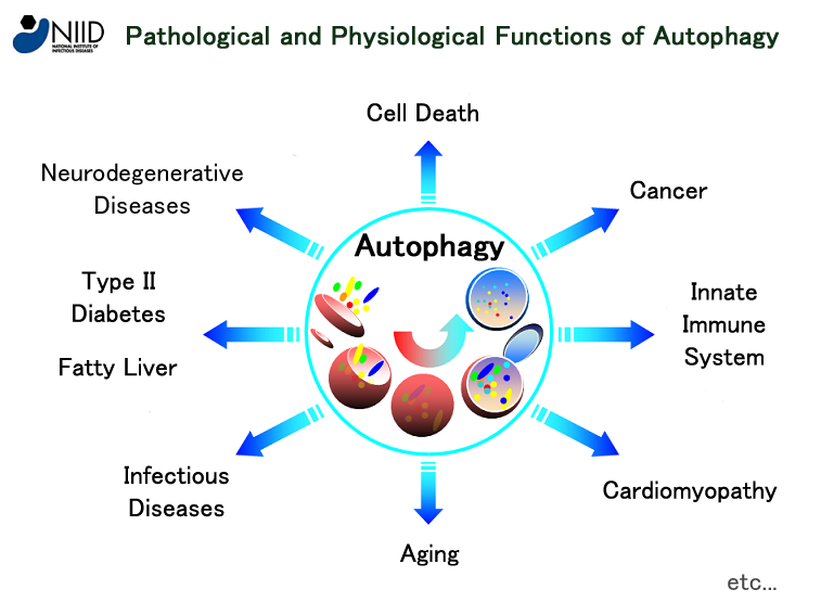 Autophagy Database